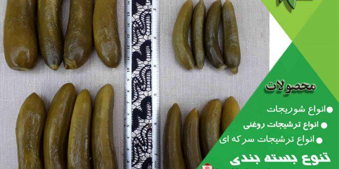 صادرات خیارشور