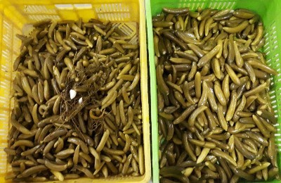 بازار فروش خیارشور