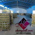 صادرات خیارشور به کویت
